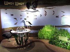 Visitors center educational exhibits Keaila National Wildlife Refuge, Maui