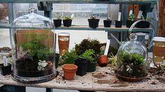 Montagem de terrários com diversas plantas para ambientes úmidos. Foto de Amy Gizienski