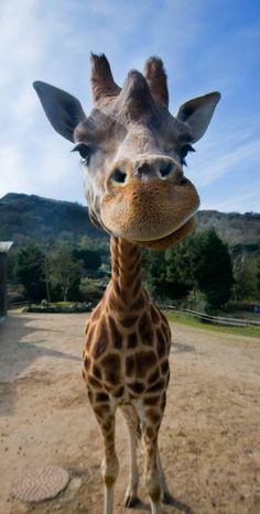 Woo at Belfast Zoo!