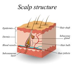 Hair growth cycle: the Science of hair & understanding how your hair grows If you want to improve or regrow your hair, it is important to comprehend the science of hair and have some understanding of the hair growth cycle. Find out all you need to know ab Hair Growth For Men, Hair Growth Cycle, Natural Hair Growth, Natural Hair Styles, Clean Hairbrush, Skin Anatomy, Hair Science, Hair Cutting Techniques, Hairstylist Quotes