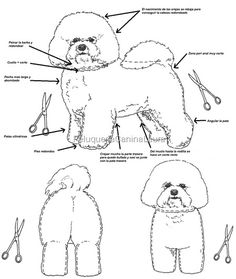 The Cheerful Havanese Pups Size Dog Grooming Styles, Dog Grooming Clippers, Dog Grooming Tips, Grooming Salon, Havanese Grooming, Poodle Grooming, Bichon Dog, Havanese Puppies, Cortes Poodle