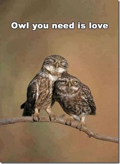 Owl You need is Love ❤️