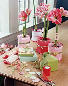Easy Crepe-paper wrapped potted plants.   Potted Amaryllis Gift  (Martha Stewart)