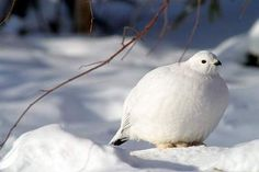 <b>These birds are so fat, <i>you'll</i> go on a diet.</b> Presenting—for your gluttonous pleasure—the plumpest, most morbidly obese birds on the whole dang planet Earth.