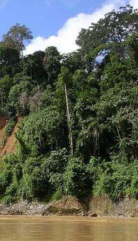 Amazon Rainforest facts for kids