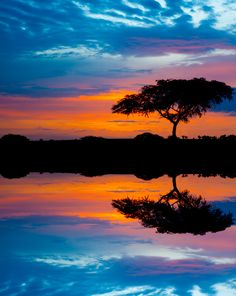 ✯ Acacia Tree in the Murchinson National Park, Uganda