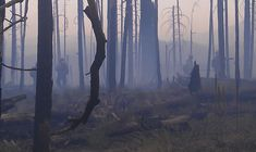 The Southwest's Forests May Never Recover from Megafires - The ...