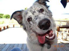 Lori U.'s pooch has quite the sense of humor! #dog #smile #funny