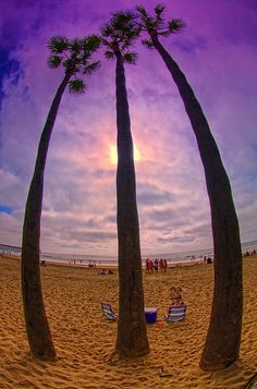 Three Palms - Newport Beach, California