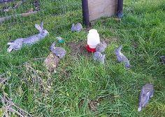 Raising Rabbits in Colonies