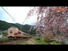 381系・287系 特急きのさき 桜のある風景 - YouTube
