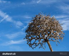 Old Dead Tree On Blue Sky Background Stock Photo 477745720 : Shutterstock