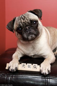 """Of all the nice dog breed names, I'm a pug?  Did you notice that's only one letter away from PIG!"""