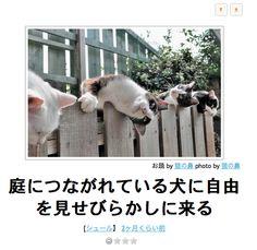 Animals And Pets, Funny Animals, World Cat, Funny Cute, Funny Moments, I Love Cats, Neko, Mammals, Dog Cat