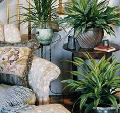 Home Decoration Ideas With Plants That Purify Air