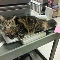 Pet Card With Images Kitten Adoption Cat Adoption Pets