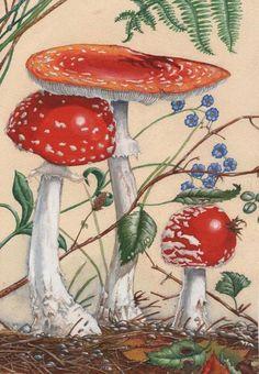 Kevin Crossley- Mushrooms