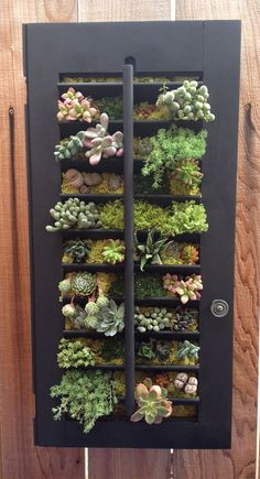 Custom Color Succulent Vertical Garden Shutter by LoliviaGifts, $100.00