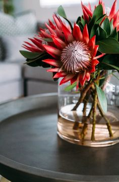 These beautiful #proteas are found in the Linhof Boutique Guest House on the oceanfront of #Paternoster. Click on the link to view more breathtaking photos! #TravelTuesday #TravelGround #WesternCape