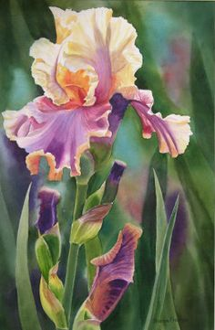 Shop for iris art from the world's greatest living artists. All iris artwork ships within 48 hours and includes a money-back guarantee. Choose your favorite iris designs and purchase them as wall art, home decor, phone cases, tote bags, and more! Watercolor Flowers, Watercolor Paintings, Watercolors, Illustration Blume, Iris Painting, Iris Flowers, Arte Floral, Botanical Art, Beautiful Paintings