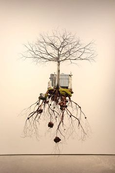 Plant Sculptures Suspended Disintegrate Into Isolated Islands [[MORE]]Cuban artist Jorge Mayet creates stunning realistic suspended earth platforms that appear to disintegrate into a network of roots...