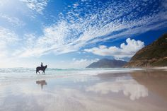 Peace and quiet ... stunning horse ride on Long Beach, #Noordhoek #Cape Town www.superiorsalesandrentals.co.za