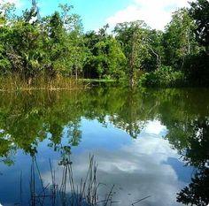 Mead Garden/ Winter Park, Florida