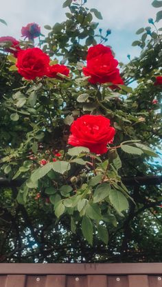 Web Design, Graphic Design, Woodstock, Red Roses, Posts, Creative, Flowers, Design Web, Messages
