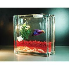Try a simple betta fish in a super cool small fish bowl for mom on Mother's Day. Glass Block Crafts, Glass Blocks, Glass Craft, Beta Fish Centerpiece, Breeding Betta Fish, Cool Fish Tanks, Betta Fish Care, Betta Tank, Discus Fish