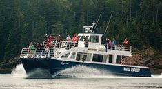 Navigate the Fundy tides on a modern, spacious power catamaran! Enjoy expert interpretation, touch tank, hot chocolate and hearty cookies as you watch for whales and other wildlife.