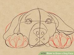 Draw a Dog Face – Drawing Techniques Pencil Art Drawings, Art Drawings Sketches, Easy Drawings, Animal Sketches, Animal Drawings, Dog Drawings, Drawing Animals, Dog Face Drawing, Face Dog