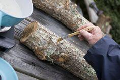Learn how to grow mushrooms - so easy!