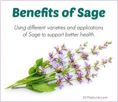 Benefits of Sage