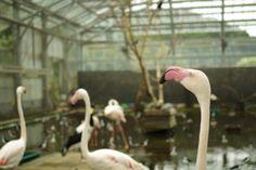 掛川花鳥園/フラミンゴ