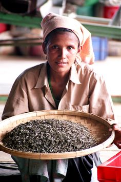 Tea from Darjeeling. www.teacampaign.ca Source: see below.
