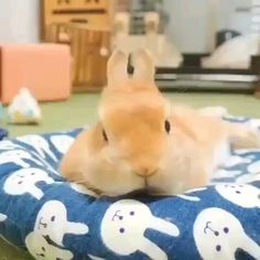 Cute Bunny Pictures, Cute Animal Photos, Cute Animal Videos, Cute Baby Bunnies, Funny Bunnies, Funny Animal Jokes, Cute Funny Animals, Happy Animals, Animals And Pets
