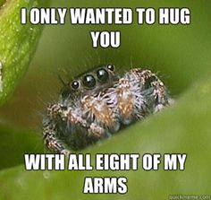 [Image - 499876] | Misunderstood Spider | Know Your Meme