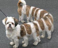doggerpillar-animal-hybrids Ha Ha Ha, gotta be a photo shopped picture, still pretty cool looking!