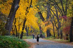 Hikers walk under a canopy of bright fall colors in Lower Bidwell Park, Chico.