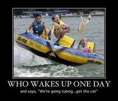 "Who wakes up one day and says, ""We're going tubing...get the cat""--hysterical"