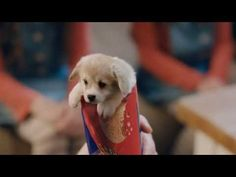 This Is Probably The Cutest Biscuits Ad Ever. You would enjoy the latest ad of McVitie's Original Digestives Sweet. Corgi Funny, Cute Corgi, Cute Puppies, Best Dog Breeds, Best Dogs, Welsh Corgi Puppies, Corgi Pups, Baby Animals, Cute Animals