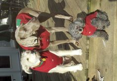 Christmas + dogs = pure joy