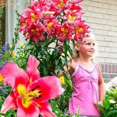 Gigantické stromkové lilie 'Satisfaction' Oriental Lily, Google, Flowers, Lilies