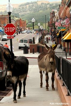 Rae Berry Bracken Henderson ~ Now That's Colorado - Cripple Creek, CO. Now that's my kinda town. Mountains in the background stores and restaurants in a beautiful town and donkeys. ❤️