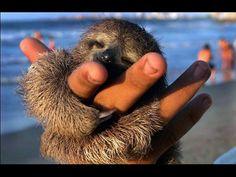 So...I really like sloths. Especially this one.