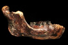 For the first time ever, an archaicfossil from our genus Homo has been discovered in Taiwan. Until now, ancient Asian hominins (that's us and our ancestors) have mostly beenfound in China, Indonesia, and further west. That means this fossil, described in Nature Communications this week, will begin to fill a big geographical gap in the Asian fossil record.