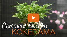 Kokedama comment faire ? Kokedama instructions - Kokedama DIY - Chroniqu...