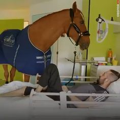 """Rakesh Valsan on LinkedIn: """"A horse whisperer is a horse trainer who understands a horse's psychology and accordingly handles the animal with love, care and sympathy. So what do you call a horse which understands the psychology of chronic human patients a Funny Horse Videos, Funny Horses, Cute Animal Videos, Cute Horses, Horse Love, Beautiful Horses, Animals Beautiful, Pretty Horses, Cute Little Animals"""