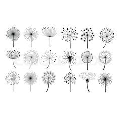 18726697-dandelion-fluffy-seeds-flowers-set.jpg (800×800)