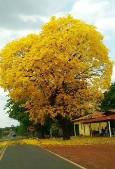 A imagem pode conter: árvore, céu, nuvem, planta, atividades ao ar livre e natureza